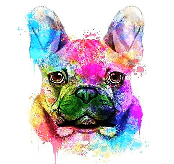 Paint By Numbers Kit Colorful Dog - Paint By Number Shop