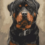 Paint by Numbers Kit Rottweiler Dog - Paint By Numbers Kit Shop