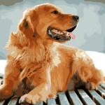Paint by Numbers Kit Dog Golden Retriever - Paint By Numbers Kit Shop