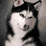 Paint by Numbers Kit Dog Cute Husky - Paint By Numbers Kit Shop