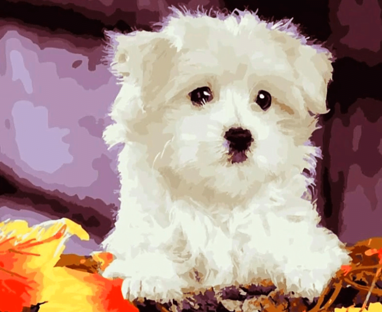 Paint by Number Kit White Cute Dog - Paint By Number Shop