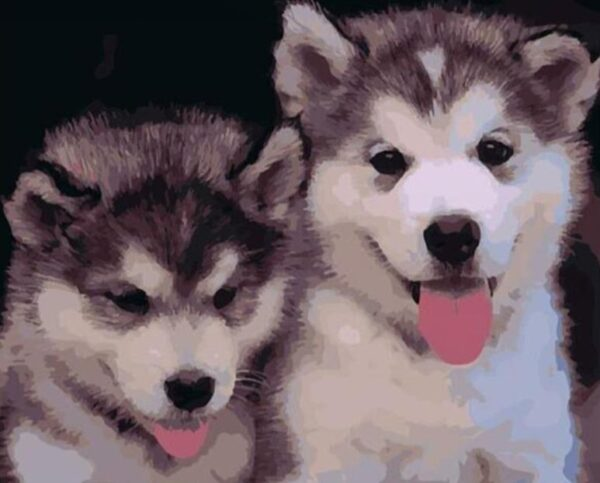 Paint by Numbers Kit Puppies Husky - Paint By Numbers Kit Shop