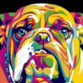 Abstract Bull Dog Paint by Numbers Kit - Paint By Numbers Kit Shop