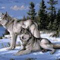 Two Wolves Paint by Numbers Kit - Paint By Number Shop