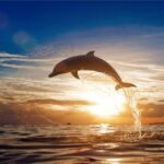 Sunset Dolphin Paint By Number Kit - Paint By Numbers Kit Shop